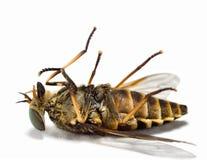 νεκρά έντομα 1 Στοκ Εικόνες