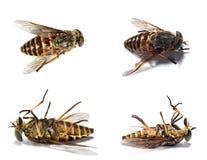 νεκρά έντομα 1 Στοκ φωτογραφίες με δικαίωμα ελεύθερης χρήσης