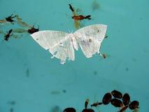 νεκρά έντομα Στοκ Εικόνες
