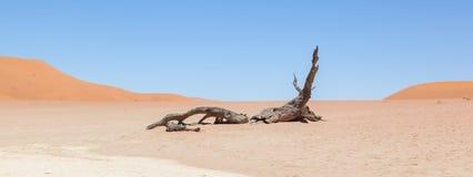 Νεκρά δέντρα ακακιών και κόκκινοι αμμόλοφοι της ερήμου Namib Στοκ Εικόνα