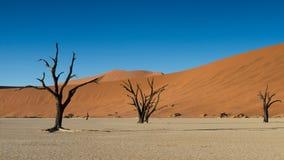 Νεκρά δέντρα και κόκκινοι αμμόλοφοι άμμου Στοκ Φωτογραφία
