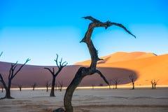 Νεκρά δέντρα και κόκκινο dunesб Deadvlei, Sossusvlei, Ναμίμπια Camelthorn Στοκ φωτογραφία με δικαίωμα ελεύθερης χρήσης