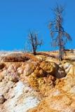 Νεκρά δέντρα που κολλούν από την άνοιξη παλετών τις μαμμούθ καυτές ανοίξεις Στοκ εικόνες με δικαίωμα ελεύθερης χρήσης