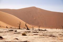 Νεκρά δέντρα σε Deadvlei, έρημος Namib, Ναμίμπια Στοκ Εικόνες