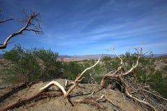 Νεκρά δέντρα στην κοιλάδα θανάτου, Καλιφόρνια Στοκ Φωτογραφίες