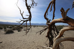 Νεκρά δέντρα στην κοιλάδα θανάτου, Καλιφόρνια Στοκ εικόνες με δικαίωμα ελεύθερης χρήσης