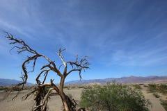 Νεκρά δέντρα στην κοιλάδα θανάτου, Καλιφόρνια Στοκ εικόνα με δικαίωμα ελεύθερης χρήσης