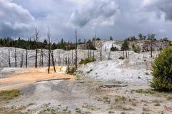 Νεκρά δέντρα στη μαμμούθ καυτή περιοχή ανοίξεων του εθνικού πάρκου Yellowstone Στοκ Φωτογραφίες