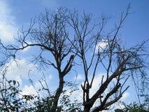 νεκρά δέντρα στο υπόβαθρο μπλε ουρανού Στοκ εικόνα με δικαίωμα ελεύθερης χρήσης