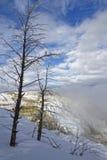 Νεκρά δέντρα τις μαμμούθ καυτές ανοίξεις Στοκ Φωτογραφία