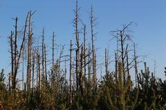 Νεκρά δέντρα στοκ φωτογραφία