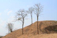 Νεκρά δέντρα Στοκ Εικόνες