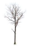 Νεκρά δέντρα Στοκ φωτογραφία με δικαίωμα ελεύθερης χρήσης