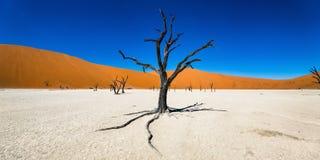 Νεκρά δέντρα Camelthorn ενάντια στο μπλε ουρανό σε Deadvlei, Sossusvlei Στοκ Φωτογραφίες