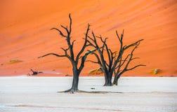 Νεκρά δέντρα Camelthorn και κόκκινοι αμμόλοφοι σε Deadvlei, Sossusvlei Στοκ Φωτογραφίες