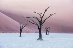 Νεκρά δέντρα Camelthorn και κόκκινοι αμμόλοφοι σε Deadvlei, Sossusvlei, Nam Στοκ εικόνα με δικαίωμα ελεύθερης χρήσης
