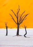 Νεκρά δέντρα Camelthorn και κόκκινοι αμμόλοφοι, Deadvlei, Sossusvlei, Ναμίμπια Στοκ Εικόνα