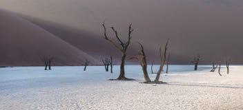 Νεκρά δέντρα Camelthorn και κόκκινοι αμμόλοφοι, Deadvlei, Sossusvlei, Ναμίμπια Στοκ Φωτογραφία