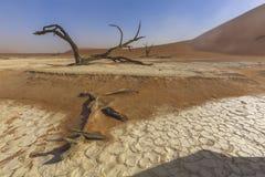 νεκρά δέντρα deadvlei Στοκ Εικόνα