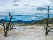 Νεκρά δέντρα Yellowstone Στοκ εικόνα με δικαίωμα ελεύθερης χρήσης