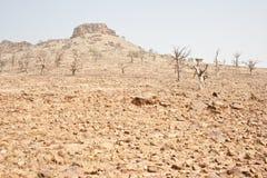 νεκρά δέντρα βράχου στοκ φωτογραφίες