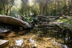 Νεκρά δέντρα και πραγματικά σαφές νερό Στοκ εικόνες με δικαίωμα ελεύθερης χρήσης