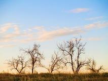 νεκρά δέντρα ομάδας στοκ φωτογραφία με δικαίωμα ελεύθερης χρήσης