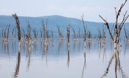 Νεκρά δέντρα στην πλημμυρισμένη λίμνη Στοκ Φωτογραφίες