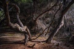 Νεκρά δέντρα στη σκοτεινή ζούγκλα Στοκ εικόνα με δικαίωμα ελεύθερης χρήσης