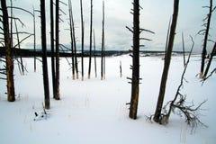 Νεκρά δέντρα το χειμώνα στο ίχνος φύσης δοχείων χρωμάτων πηγών στο εθνικό πάρκο Yellowstone στο Ουαϊόμινγκ ΗΠΑ στοκ εικόνα