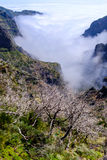 Νεκρά δέντρα υψηλά στα βουνά στοκ φωτογραφίες με δικαίωμα ελεύθερης χρήσης