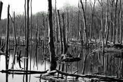 νεκρά δέντρα Στοκ φωτογραφίες με δικαίωμα ελεύθερης χρήσης