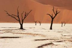 νεκρά δέντρα Στοκ Εικόνα