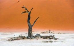 Νεκρά δέντρα Camelthorn και κόκκινοι αμμόλοφοι, Deadvlei, Sossusvlei, Ναμίμπια Στοκ εικόνα με δικαίωμα ελεύθερης χρήσης