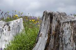 Νεκρά και άγρια λουλούδια βουνών Στοκ φωτογραφία με δικαίωμα ελεύθερης χρήσης