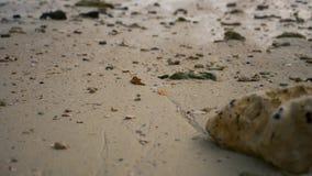 Νεκρά κοράλλια και κοχύλια σε μια τροπική παραλία φιλμ μικρού μήκους