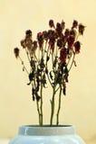 Νεκρά λουλούδια vase Στοκ εικόνα με δικαίωμα ελεύθερης χρήσης