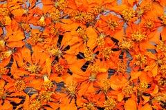 Νεκρά λουλούδια κόσμου Στοκ Εικόνες