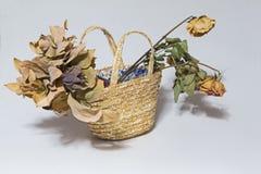 Νεκρά λουλούδια Στοκ φωτογραφία με δικαίωμα ελεύθερης χρήσης