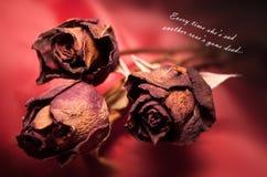 νεκρά τριαντάφυλλα Στοκ Εικόνες