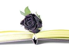 Νεκρά τριαντάφυλλα και βιβλίο. Στοκ Φωτογραφία