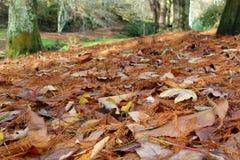 Νεκρά φύλλα σε ένα δάσος Στοκ Εικόνα