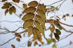 Νεκρά φύλλα και δέντρο κλάδων Στοκ φωτογραφίες με δικαίωμα ελεύθερης χρήσης