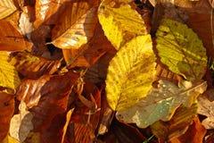 Νεκρά φύλλα Στοκ εικόνα με δικαίωμα ελεύθερης χρήσης