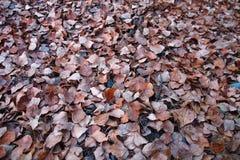Νεκρά φύλλα Στοκ φωτογραφίες με δικαίωμα ελεύθερης χρήσης