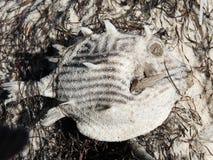 νεκρά ψάρια κιβωτίων Στοκ εικόνα με δικαίωμα ελεύθερης χρήσης