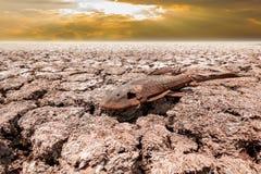 Νεκρά ψάρια στη ραγισμένη γη στην επίδραση θερμότητας λιμνών ξηρασίας του glob Α στοκ εικόνες με δικαίωμα ελεύθερης χρήσης