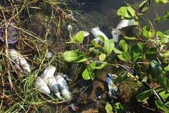 Νεκρά ψάρια στο Rodrigo de Freitas Lagoon στο Ρίο ντε Τζανέιρο Στοκ Εικόνα