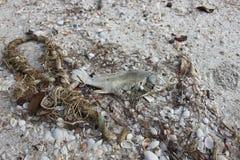 Νεκρά ψάρια Στοκ φωτογραφία με δικαίωμα ελεύθερης χρήσης