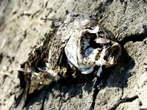 Νεκρά ψάρια Στοκ Εικόνα